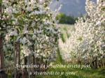 svi mislimo da je su tina drveta plod u stvarnosti to je sjeme