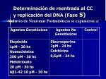 determinaci n de reentrada al cc y replicaci n del dna fase s1