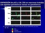 expresi n de p53 y cdc 25a en neuronas tratadas con agentes genot xicos versus no genot xicos