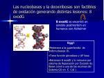 las nucleobases y la deoxiribosas son factibles de oxidaci n generando distintas lesiones 8 oxodg