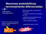 neuronas postmit ticas terminalmente diferenciadas