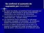 se confirm el aumento de expresi n por inmunoblot