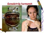 gonadotr p hormonok1