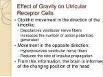 effect of gravity on utricular receptor cells