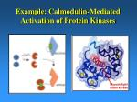 example calmodulin mediated activation of protein kinases