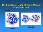 the functional unit ef hand domain no isolated ef hands