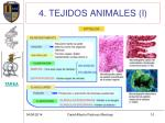 4 tejidos animales i