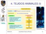 4 tejidos animales i2
