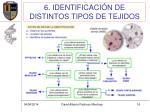 6 identificaci n de distintos tipos de tejidos