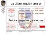 la diferenciaci n celular