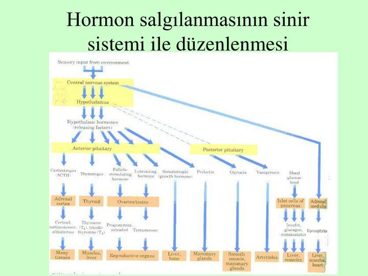 Hormon salgılanmasının sinir sistemi ile düzenlenmesi