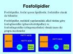 fosfolipidler