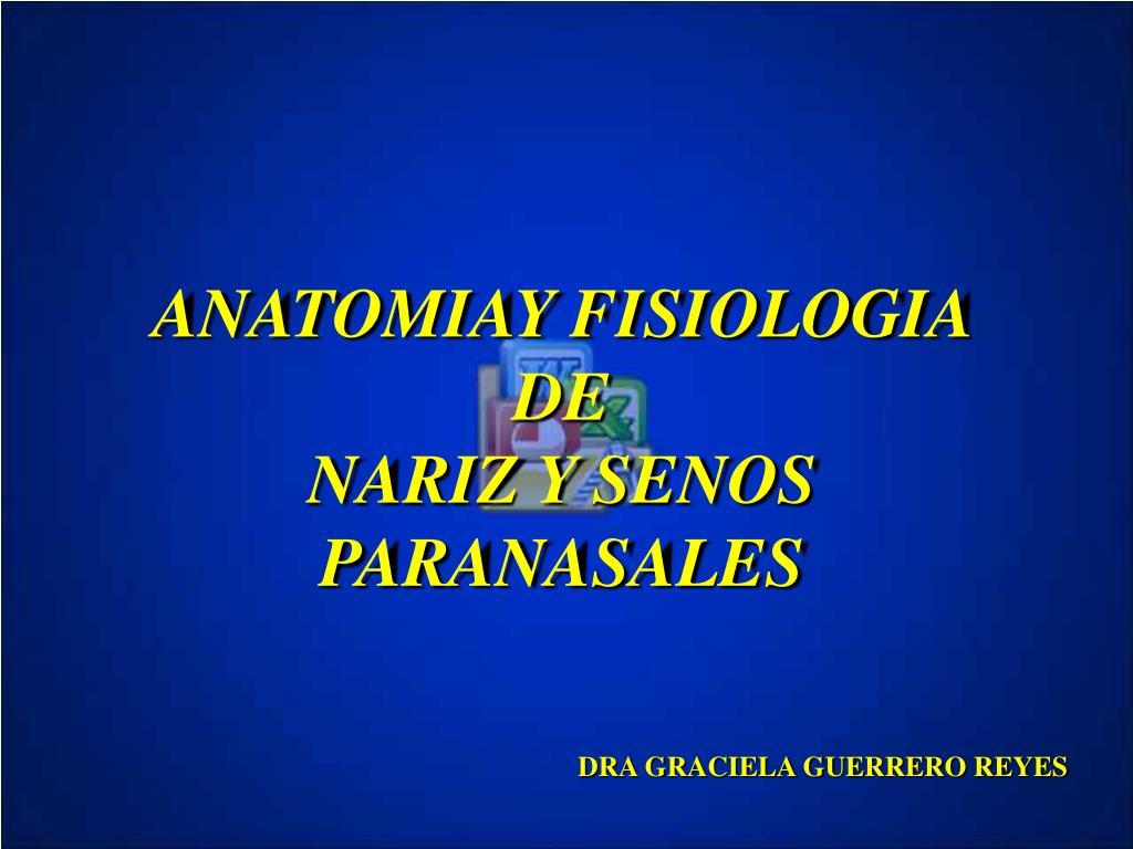PPT - ANATOMIAY FISIOLOGIA DE NARIZ Y SENOS PARANASALES PowerPoint ...