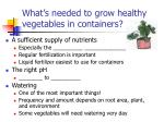 what s needed to grow healthy vegetables in containers