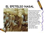 el epitelio nasal