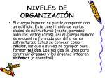 niveles de organizaci n