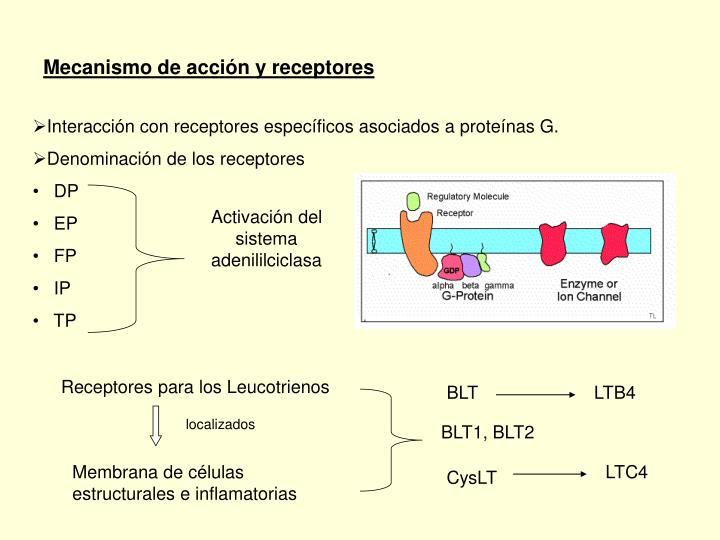 Mecanismo de acción y receptores