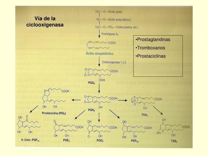 Vía de la ciclooxigenasa