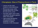 chloroplasts sites of photosynthesis in plants