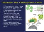 chloroplasts sites of photosynthesis in plants1