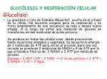 gluc lisis y respiraci n celular1
