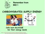 carbohydrates supply energy