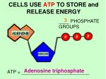 cells use atp to store and release energy