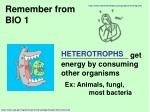 remember from bio 11