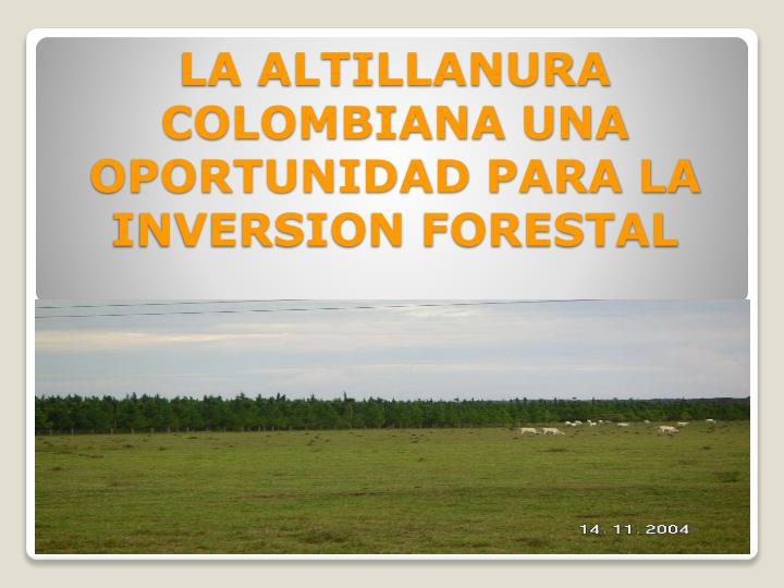 la altillanura colombiana una oportunidad para la inversion forestal n.