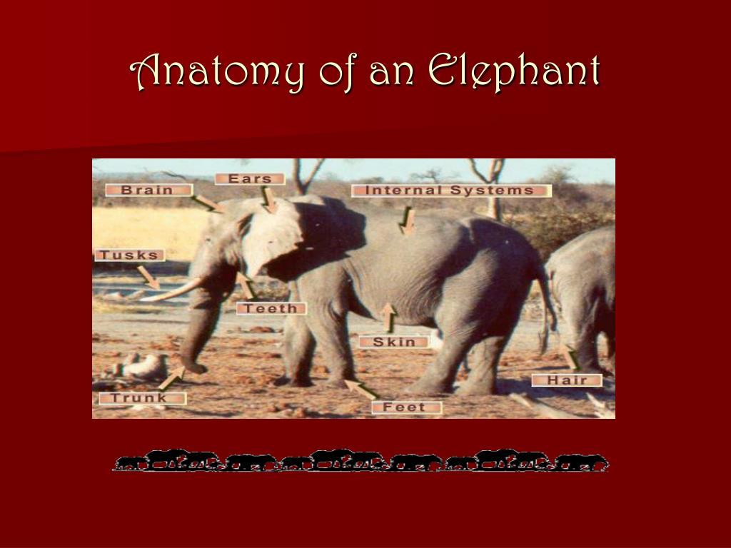 Anatomy of an Elephant