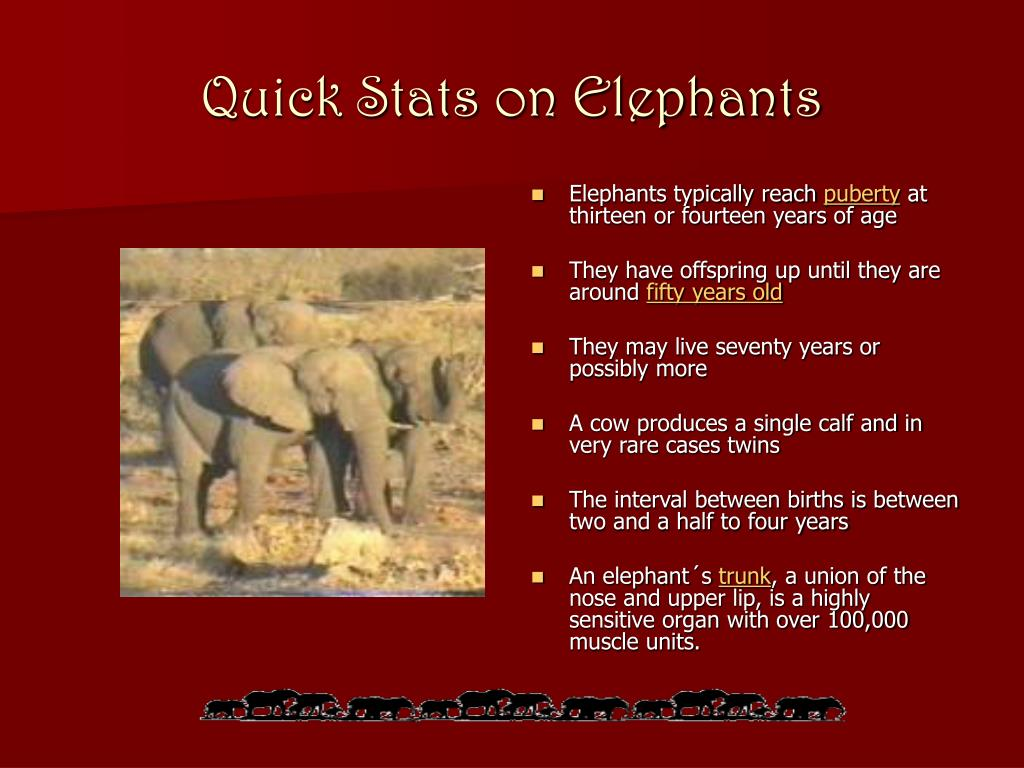 Elephants typically reach