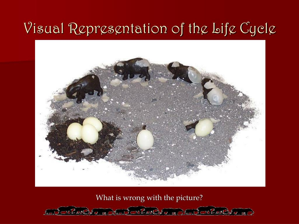 Visual Representation of the Life Cycle