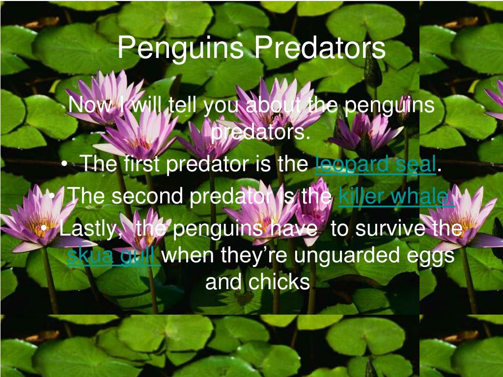 Penguins Predators