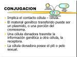conjugacion