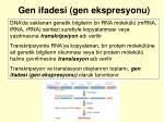 gen ifadesi gen ekspresyonu