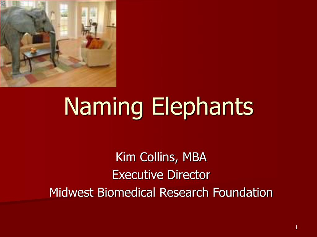 naming elephants l.
