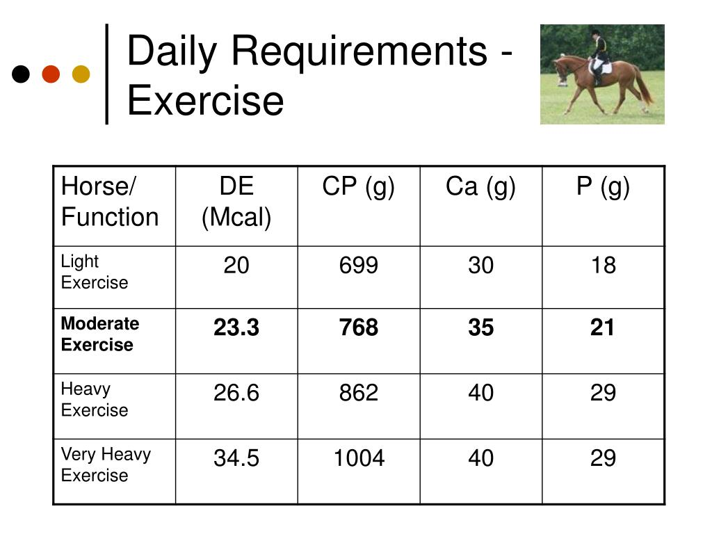 Daily Requirements - Exercise