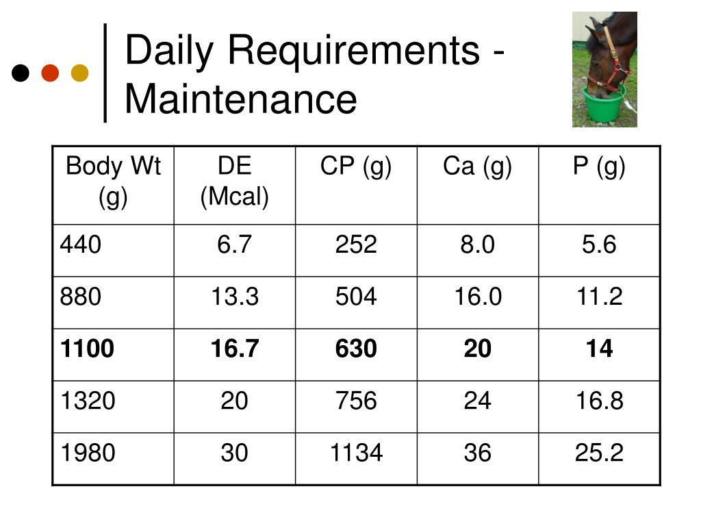 Daily Requirements - Maintenance