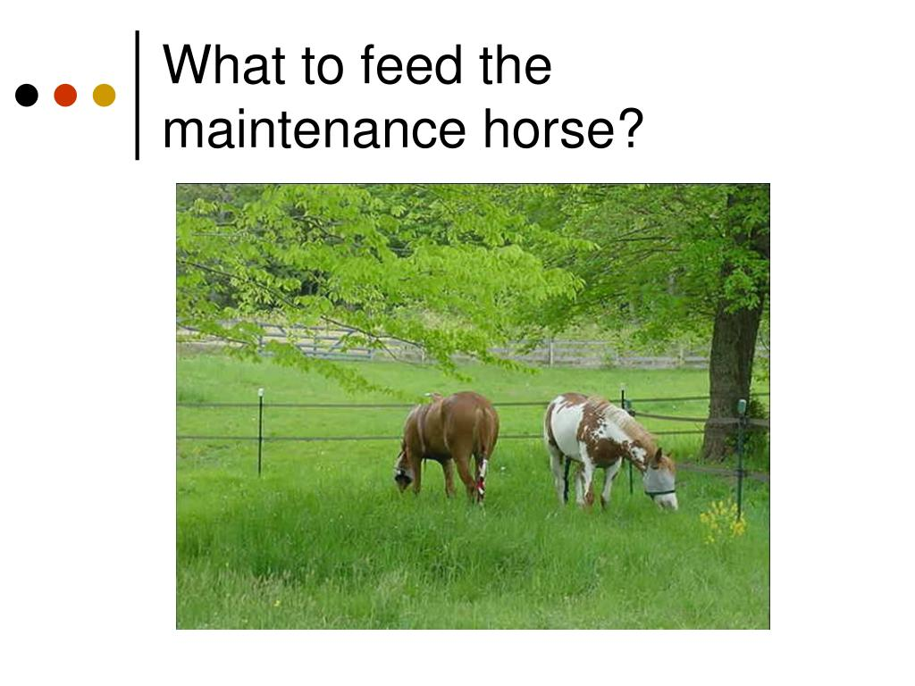 What to feed the maintenance horse?