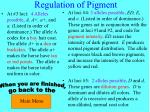 regulation of pigment