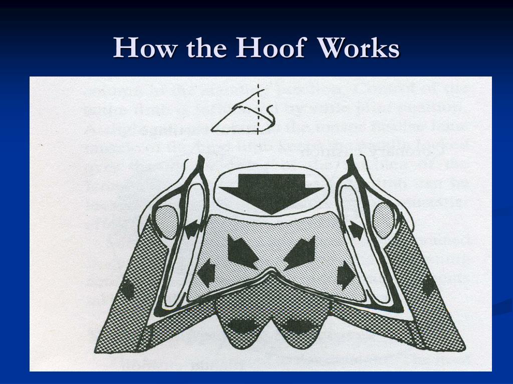 How the Hoof Works