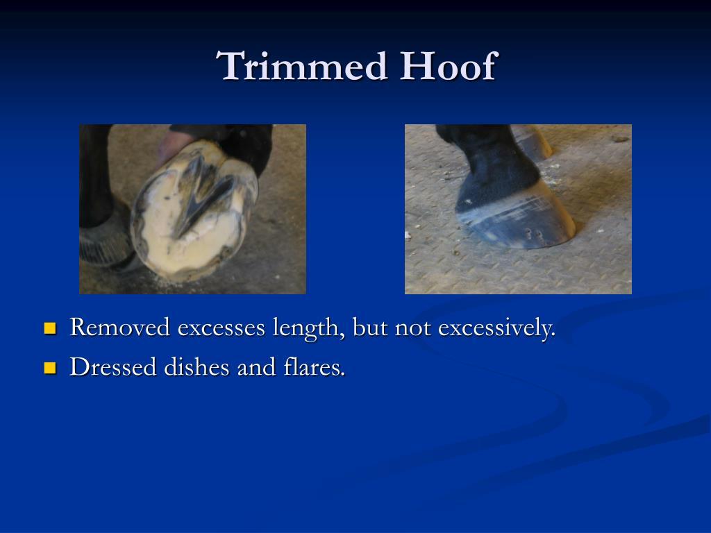 Trimmed Hoof
