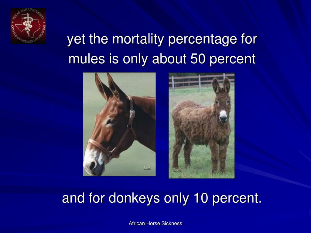 yet the mortality percentage for