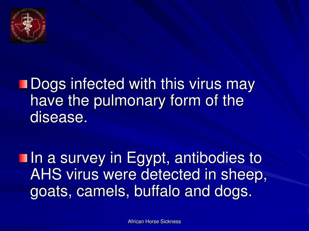 Dogs infected with this virus may have the pulmonary form of the disease.