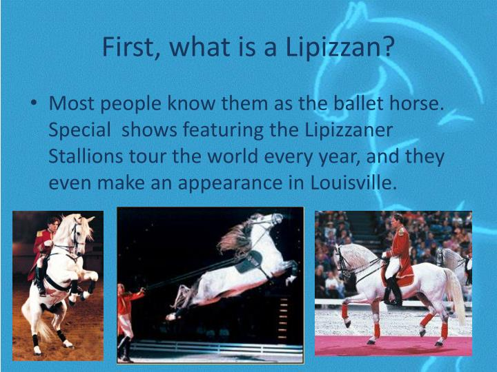 First what is a lipizzan