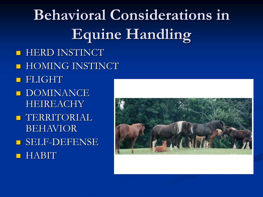 Behavioral Considerations in Equine Handling