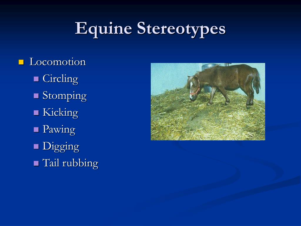 Equine Stereotypes