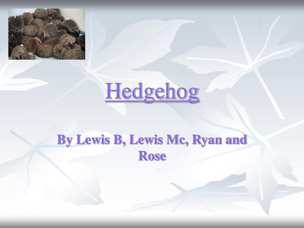 hedgehog l.