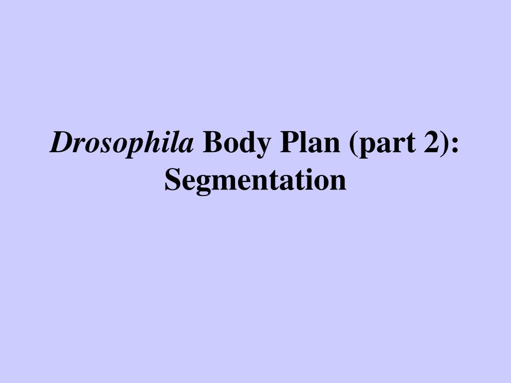 drosophila body plan part 2 segmentation l.