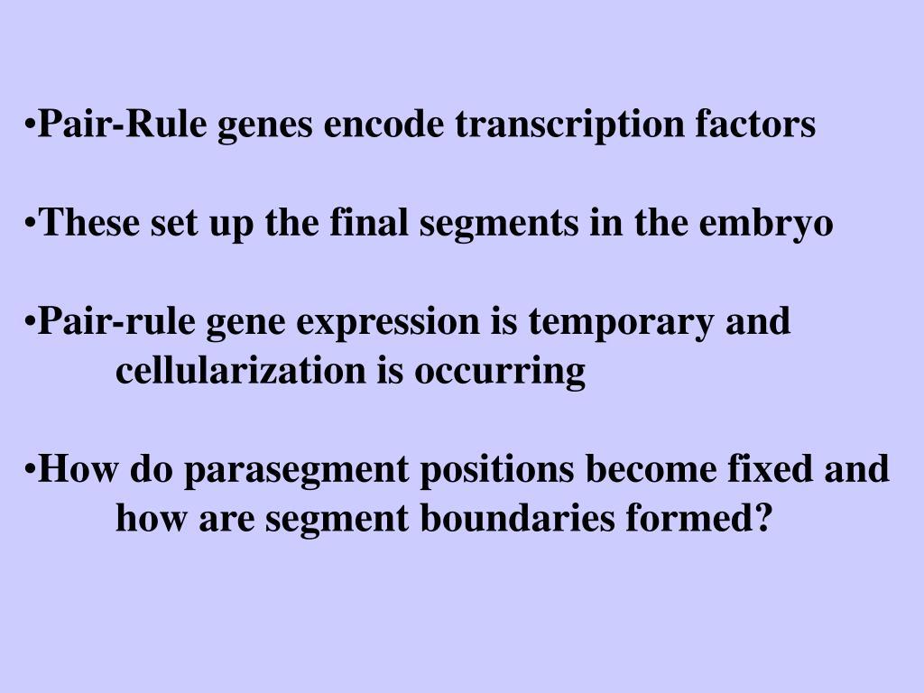 Pair-Rule genes encode transcription factors
